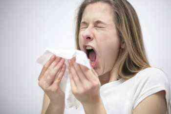цикорий при аллергии